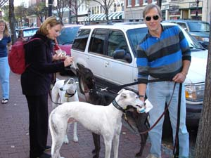 Greyhound Owners Treat their Rescued Dogs with Ice Cream in Downtown Fredericksburg - Click on  Photo for Larger Image